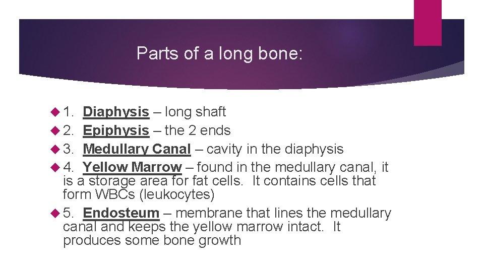 Parts of a long bone: 1. Diaphysis – long shaft 2. Epiphysis – the