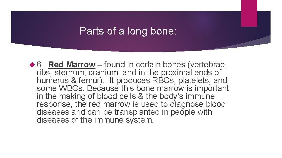 Parts of a long bone: 6. Red Marrow – found in certain bones (vertebrae,