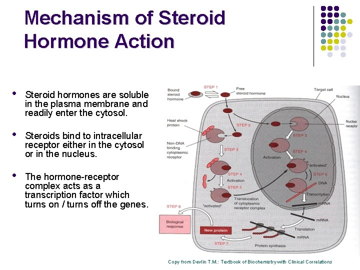 6 steps of steroid hormone action game of thrones ascent gold dragons pad