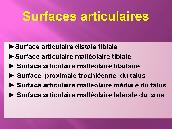 Surfaces articulaires ►Surface articulaire distale tibiale ►Surface articulaire malléolaire tibiale ► Surface articulaire malléolaire