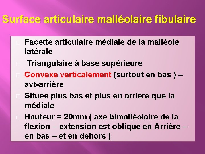 Surface articulaire malléolaire fibulaire � � � Facette articulaire médiale de la malléole latérale