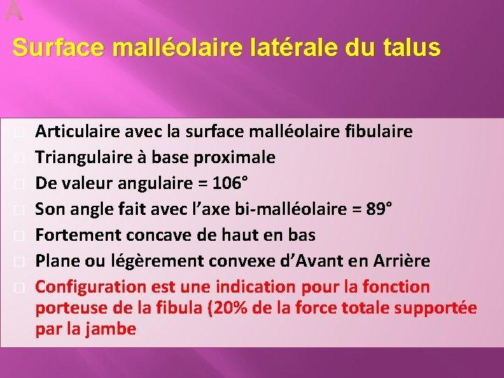 Surface malléolaire latérale du talus � � � � Articulaire avec la surface