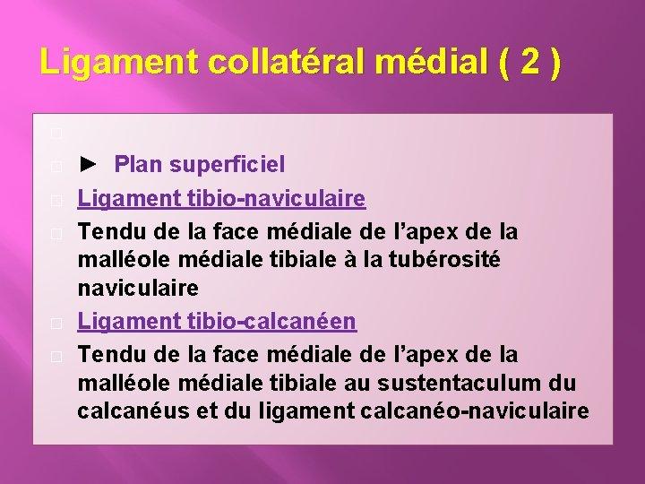 Ligament collatéral médial ( 2 ) � � � ► Plan superficiel Ligament tibio-naviculaire