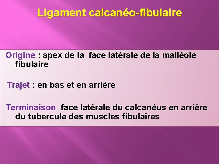 Ligament calcanéo-fibulaire Origine : apex de la face latérale de la malléole fibulaire Trajet