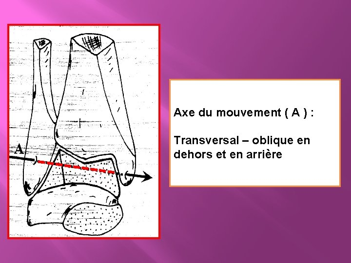 Axe du mouvement ( A ) : Transversal – oblique en dehors et en
