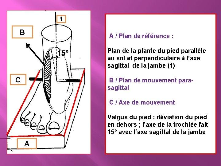 1 B C A / Plan de référence : Plan de la plante du