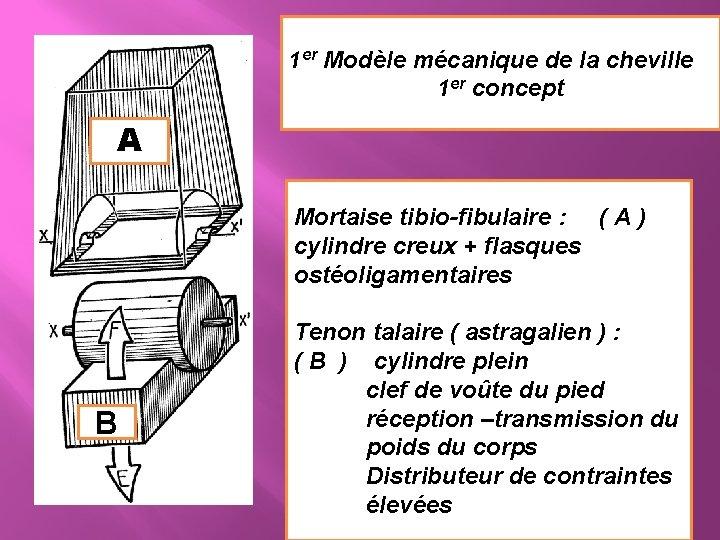 1 er Modèle mécanique de la cheville 1 er concept A Mortaise tibio-fibulaire :