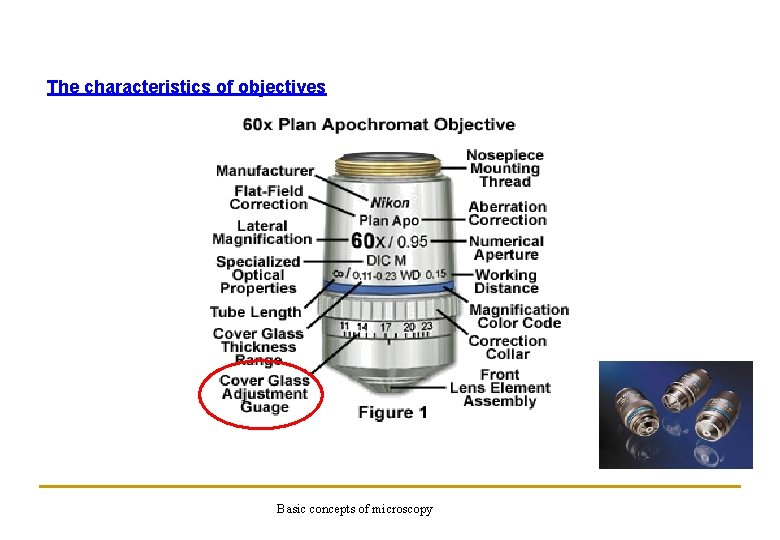 The characteristics of objectives Basic concepts of microscopy