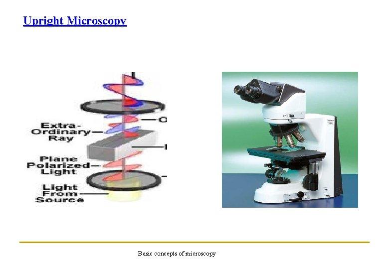 Upright Microscopy Basic concepts of microscopy