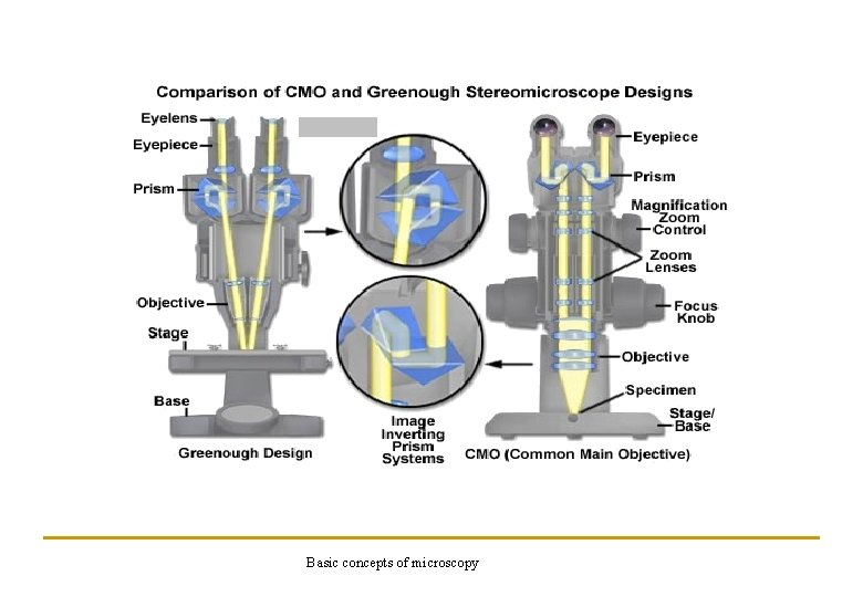 Basic concepts of microscopy