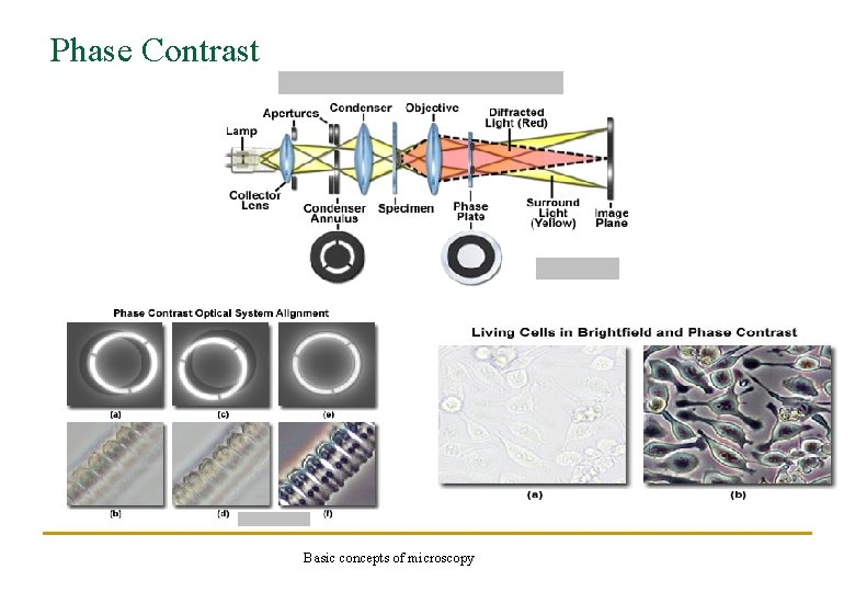 Phase Contrast Basic concepts of microscopy