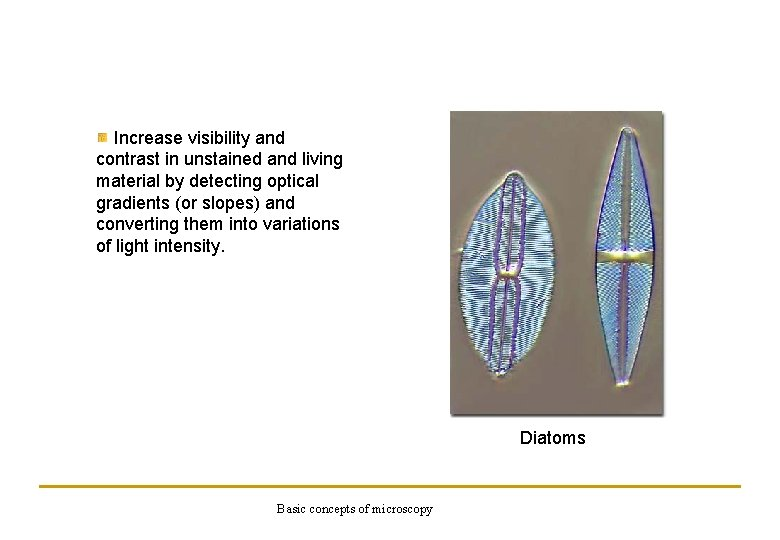 Increase visibility and contrast in unstained and living material by detecting optical gradients (or