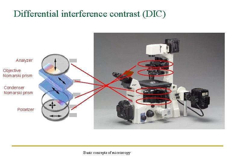 Differential interference contrast (DIC) Analyzer Objective Nomarski prism Condenser Nomarski prism Polarizer Basic concepts
