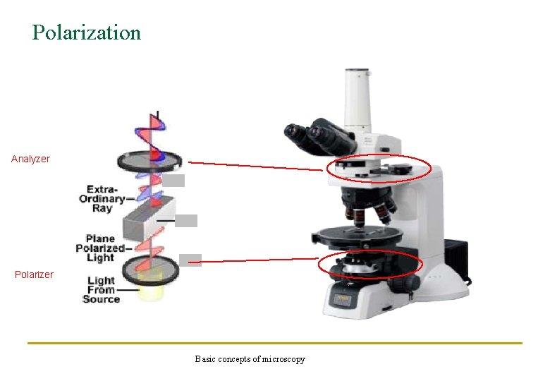 Polarization Analyzer Polarizer Basic concepts of microscopy