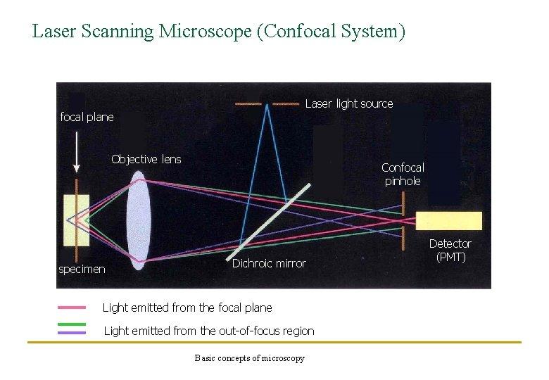 Laser Scanning Microscope (Confocal System) Laser light source focal plane Objective lens specimen Confocal