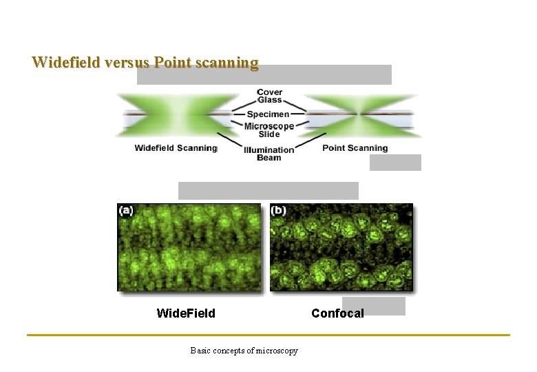 Widefield versus Point scanning Wide. Field Basic concepts of microscopy Confocal