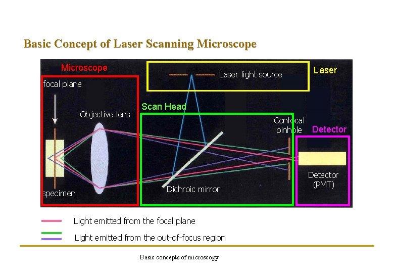 Basic Concept of Laser Scanning Microscope Laser light source focal plane Objective lens specimen
