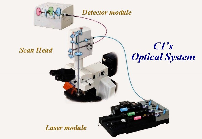 Detector module Scan Head Laser module Basic concepts of microscopy C 1's Optical System