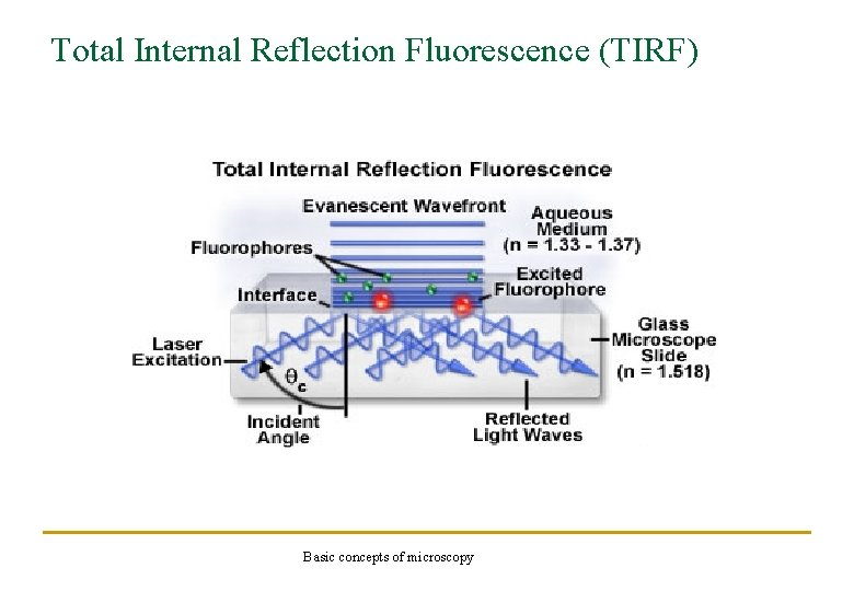 Total Internal Reflection Fluorescence (TIRF) Basic concepts of microscopy