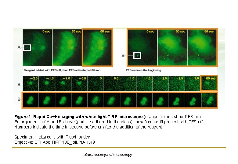Figure. 1 Rapid Ca++ imaging with white-light TIRF microscope (orange frames show PFS on)
