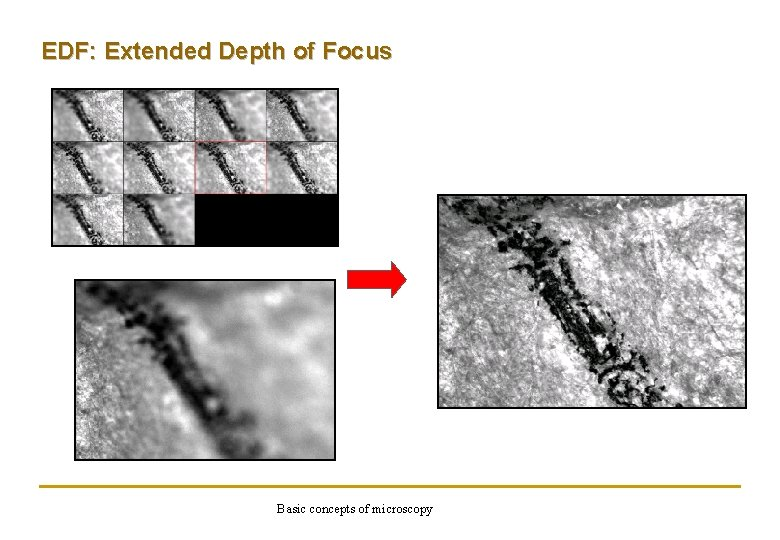 EDF: Extended Depth of Focus Basic concepts of microscopy