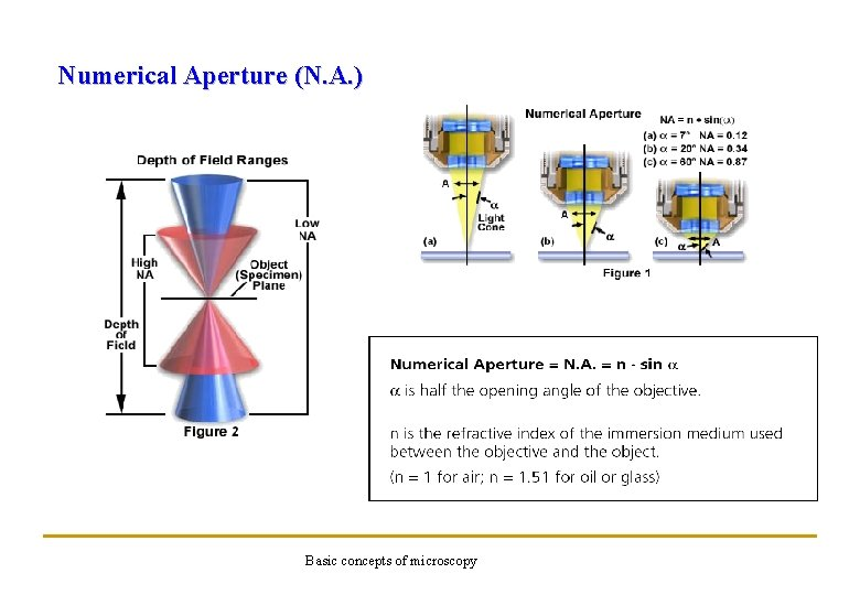 Numerical Aperture (N. A. ) Basic concepts of microscopy