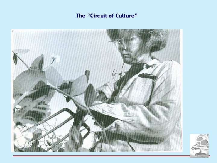 """The """"Circuit of Culture"""""""