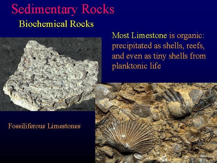 Sedimentary Rocks Biochemical Rocks Most Limestone is organic: precipitated as shells, reefs, and even