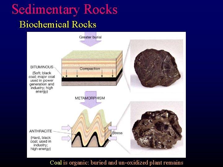 Sedimentary Rocks Biochemical Rocks Coal is organic: buried and un-oxidized plant remains