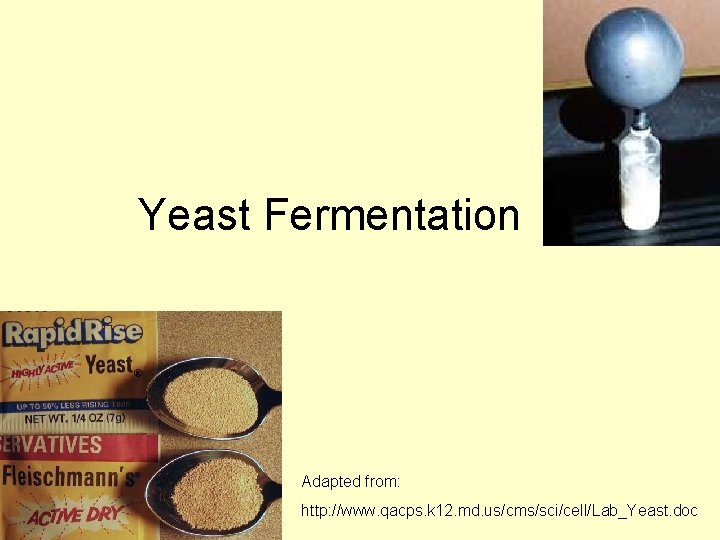 Yeast Fermentation Adapted from: http: //www. qacps. k 12. md. us/cms/sci/cell/Lab_Yeast. doc