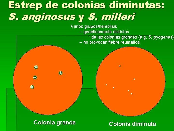 Estrep de colonias diminutas: S. anginosus y S. milleri Varios grupos/hemólisis – genéticamente distintos