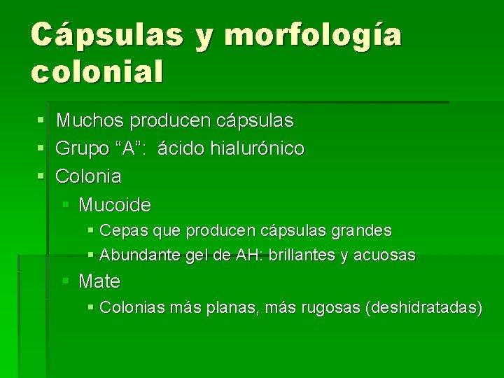 """Cápsulas y morfología colonial § Muchos producen cápsulas § Grupo """"A"""": ácido hialurónico §"""