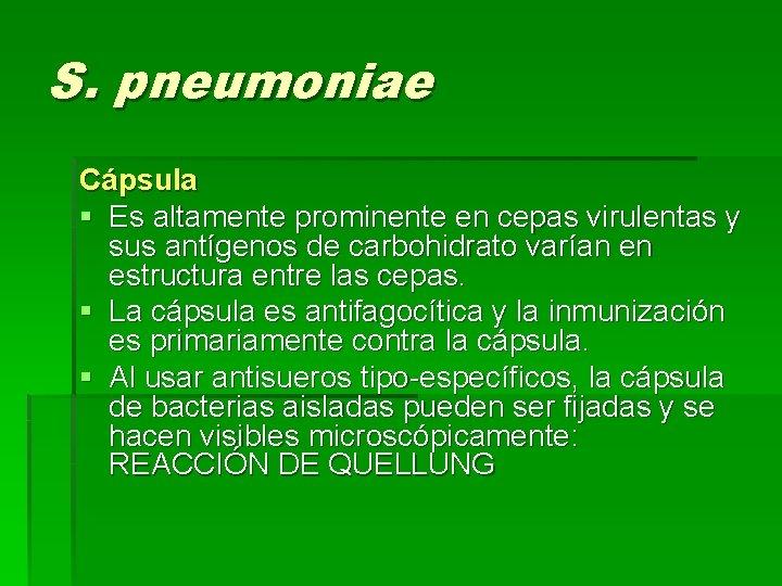 S. pneumoniae Cápsula § Es altamente prominente en cepas virulentas y sus antígenos de