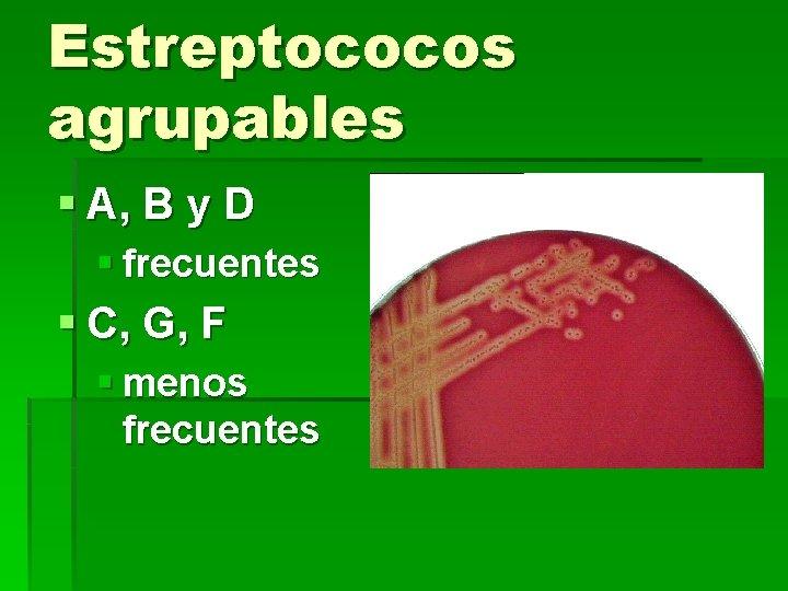 Estreptococos agrupables § A, B y D § frecuentes § C, G, F §