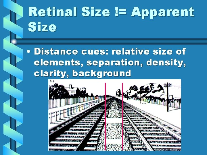 Retinal Size != Apparent Size • Distance cues: relative size of elements, separation, density,