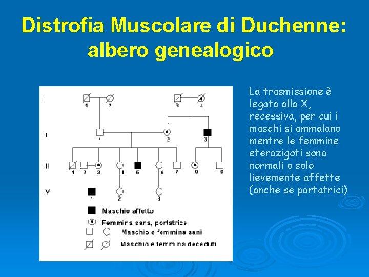 Distrofia Muscolare di Duchenne: albero genealogico La trasmissione è legata alla X, recessiva, per