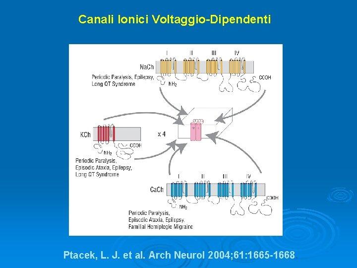 Canali Ionici Voltaggio-Dipendenti Ptacek, L. J. et al. Arch Neurol 2004; 61: 1665 -1668.