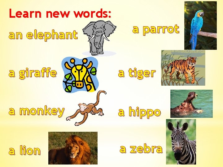 Learn new words: an elephant a parrot a giraffe a tiger a monkey a