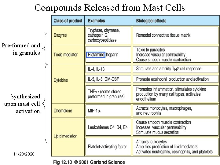 Compounds Released from Mast Cells Pre-formed and in granules Synthesized upon mast cell activation