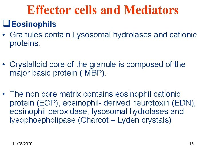 Effector cells and Mediators q. Eosinophils • Granules contain Lysosomal hydrolases and cationic proteins.