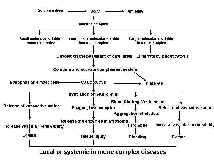 Soluble antigen Body Antibody Immune complex Small molecular soluble Immune complex intermediate molecular soluble