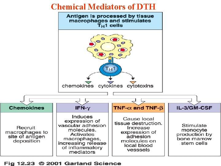 Chemical Mediators of DTH 11/28/2020 46