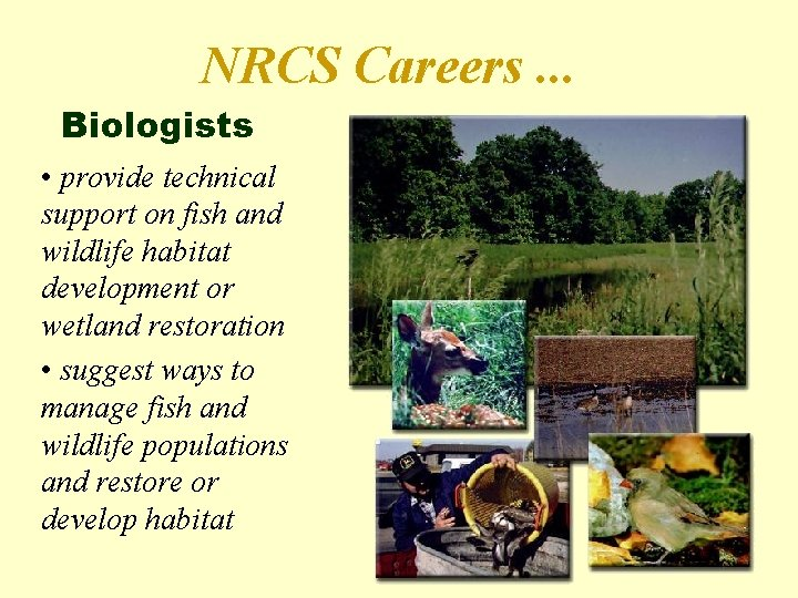 NRCS Careers. . . Biologists • provide technical support on fish and wildlife habitat