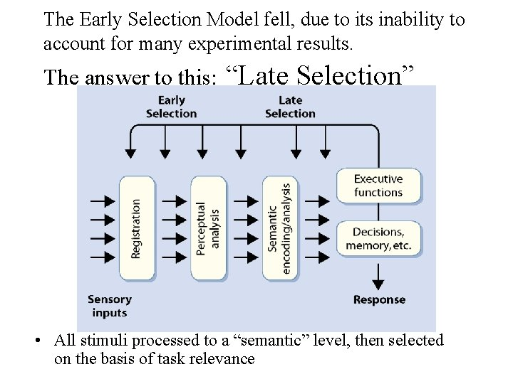 The Early Selection Model fell, due to its inability to account for many experimental