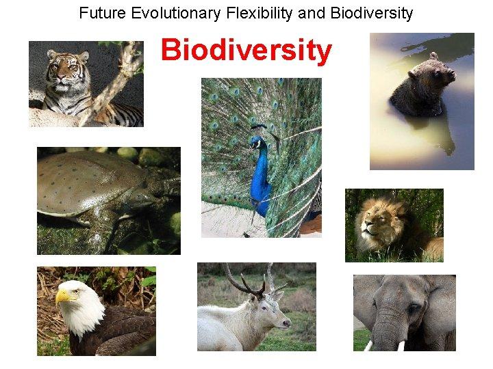 Future Evolutionary Flexibility and Biodiversity