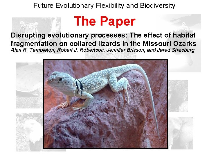 Future Evolutionary Flexibility and Biodiversity The Paper Disrupting evolutionary processes: The effect of habitat