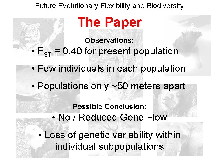 Future Evolutionary Flexibility and Biodiversity The Paper Observations: • FST = 0. 40 for