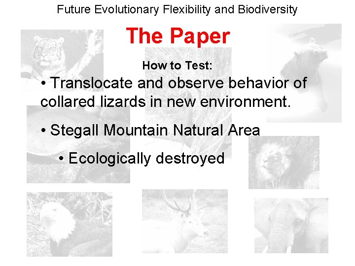 Future Evolutionary Flexibility and Biodiversity The Paper How to Test: • Translocate and observe