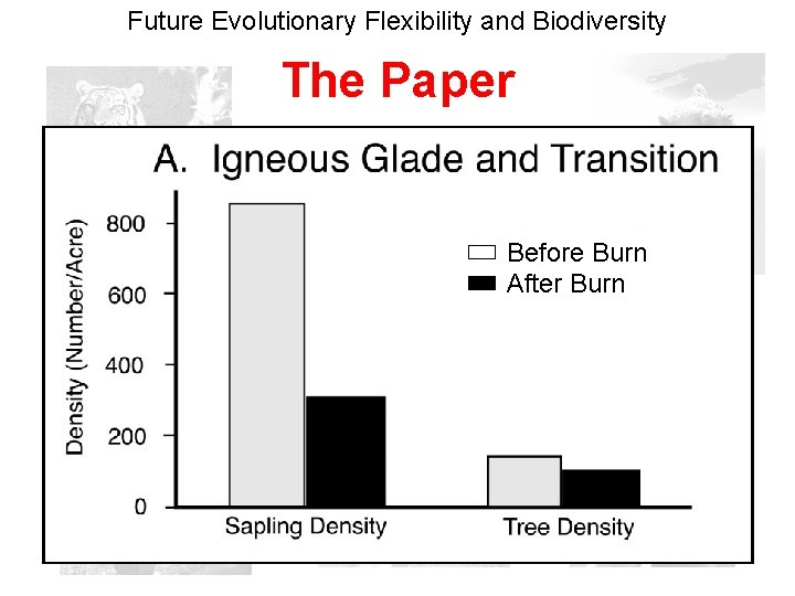 Future Evolutionary Flexibility and Biodiversity The Paper Before Burn After Burn
