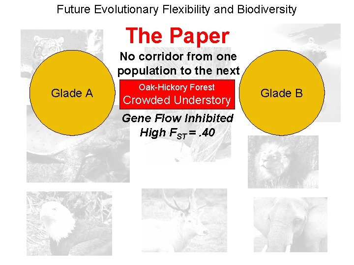 Future Evolutionary Flexibility and Biodiversity The Paper No corridor from one population to the